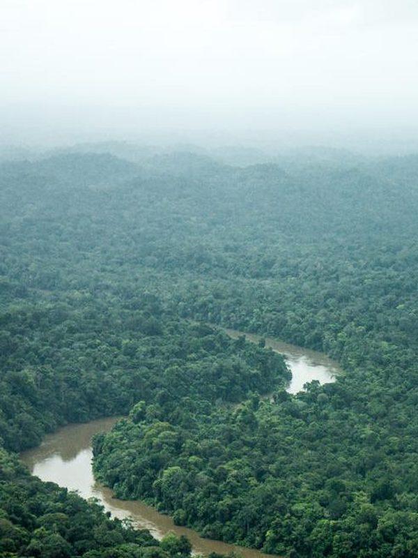 Medio ambiente y los derechos de los pueblos indígenas