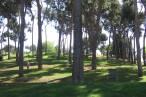 Barcelona identifica unas 1.500 especies de árboles y plantas y 532 de fauna en la ciudad
