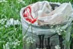 El Grupo Balear de Ornitología y Defensa de la Naturaleza (GOB) pide medidas contundentes en la Ley de Residuos