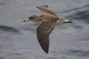 La contaminación lumínica es 'nefasta' para las aves marinas en Canarias