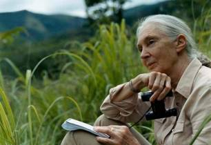 Gala del premio Artemio Precioso a la Dra. Jane Goodall