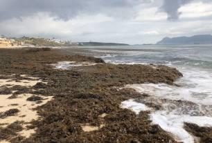 Tecnología Verde para aprovechar el alga asiática