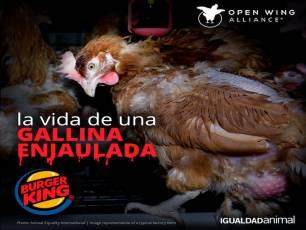 Burger King, Popeyes y Tim Hortons se deben comprometer a no comprar huevos de gallinas enjauladas