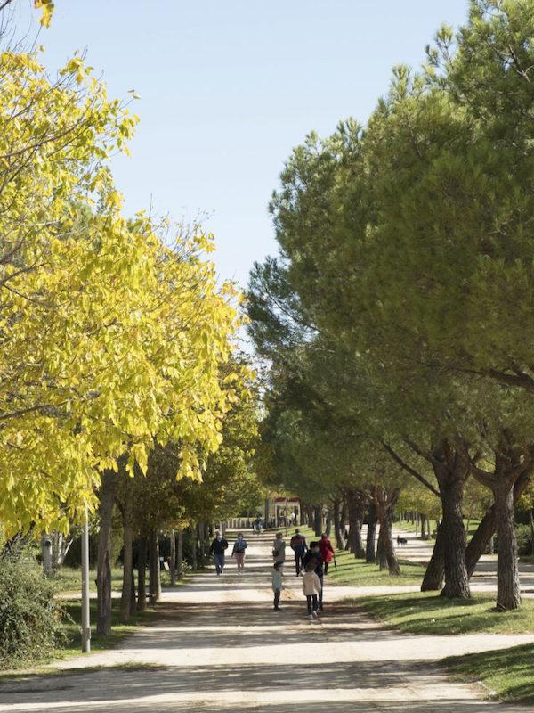 Madrid da luz verde para la inversión en mejoras de la gestión del agua y zonas verdes