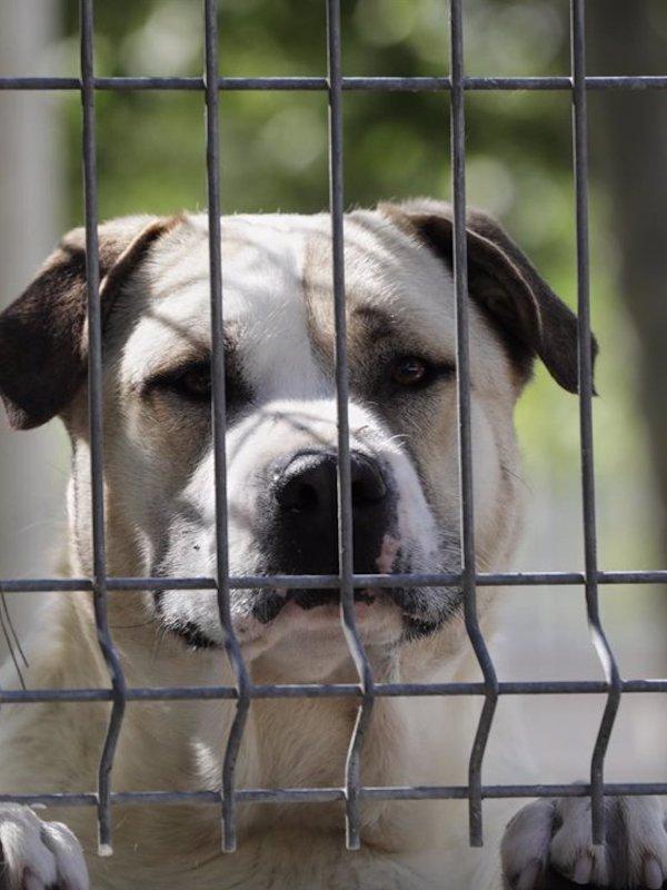 Impunidad de los maltratadores de animales