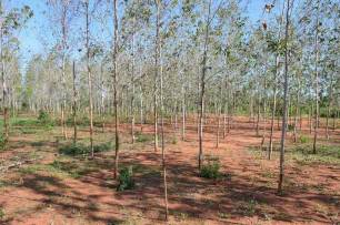 Ecologistas en Acción lanza una campaña de reforestaciones para incrementar la biodiversidad en espacios andaluces