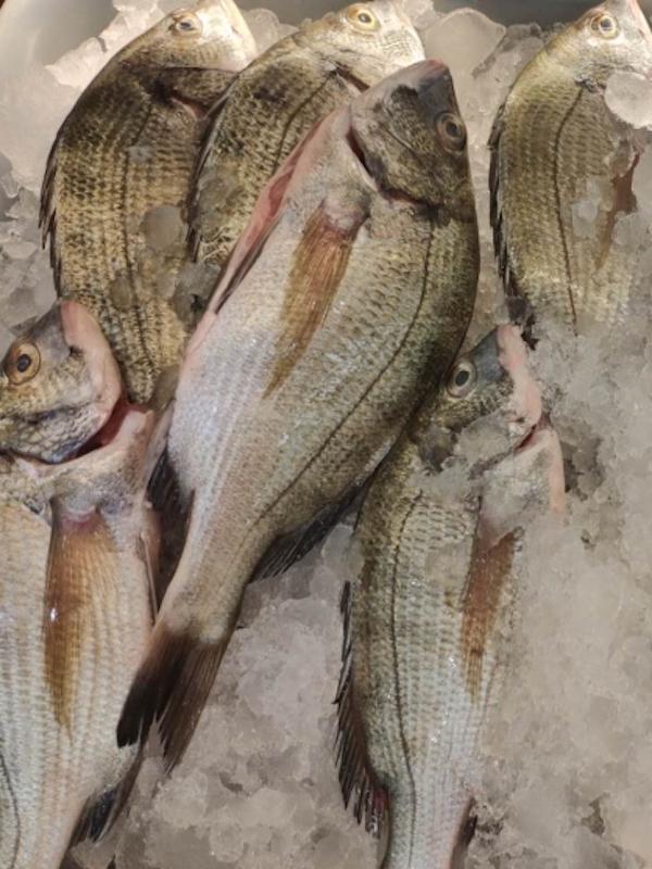 ¿Baterías sostenibles a partir de residuos de pescado?