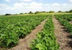 Especialistas mexicanos exponen beneficios de los agroecosistemas