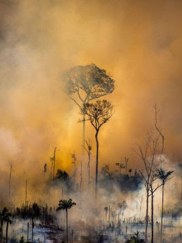 Simulan un 'incendio' ante la Embajada de Brasil para pedir mayor protección a la Amazonía