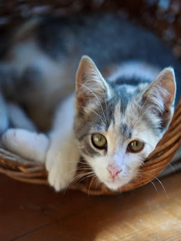 Polémica a cuenta de los 'gatos'