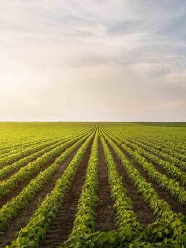 Día Mundial de la Agricultura Sostenible, 9 de septiembre