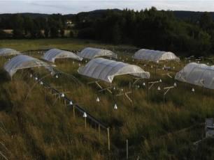 La baja sincronía de un pequeño número de especies vegetales favorece la estabilidad en los ecosistemas del mundo
