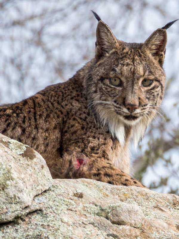 Unas 30 especies de aves y mamíferos salvados de la extinción