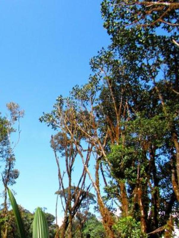 Los árboles que viven deprisa mueren jóvenes