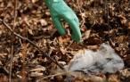 PNUMA ayudará a combatir la contaminación por plásticos