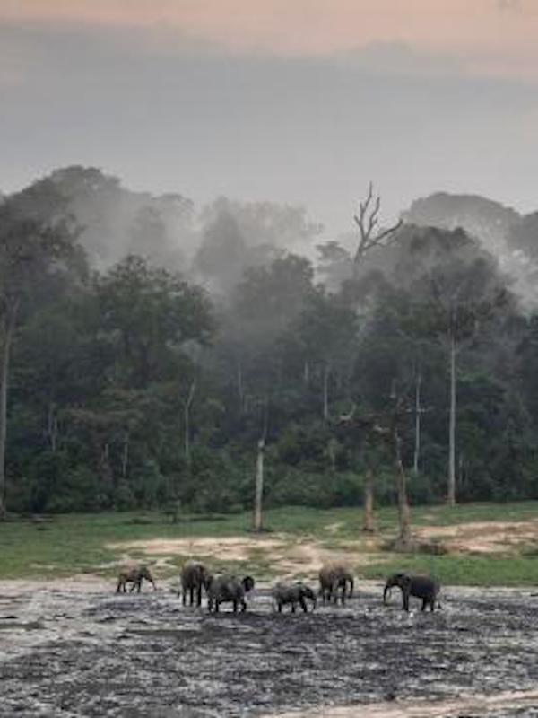 WWF alerta de que las poblaciones de fauna salvaje han disminuido una media del 68% en el último medio siglo