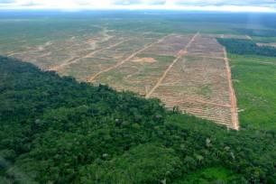 STOP a la deforestación mundial para producir soja, café o carne