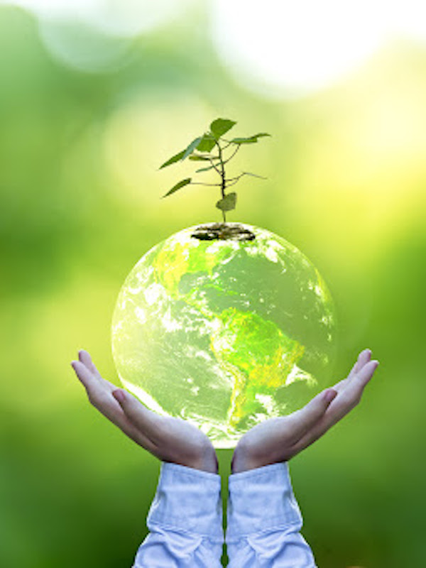 La OCDE advierte de que algunas ayudas de la reconstrucción se destinan a proyectos dañinos para el medio ambiente