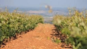 Tecnología verde para proteger los viñedos frente a las plagas