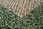 El cultivo de soja destruye la Amazonía y España es 'complice'