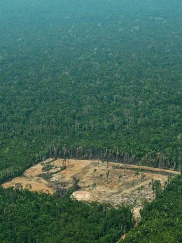 Europa destruye los bosques del planeta