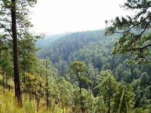 Europa por la labor de proteger los ecosistemas forestales