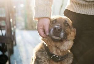 ¿Por qué la adopción de mascotas es la única opción ética?