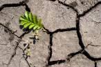 Catalunya reclama una política forestal europea para afrontar
