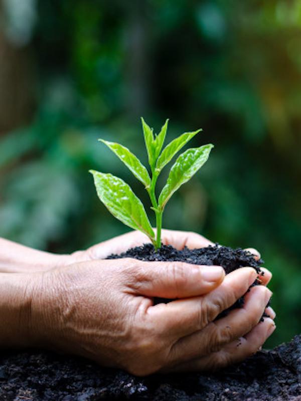 El Planeta exige acciones urgentes para proteger la naturaleza