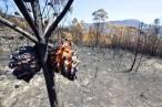 Incendios en 'Galicia', todas las claves