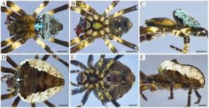 Las montañas colombianas revelan una nueva especie de araña a 3.500 metros de altitud
