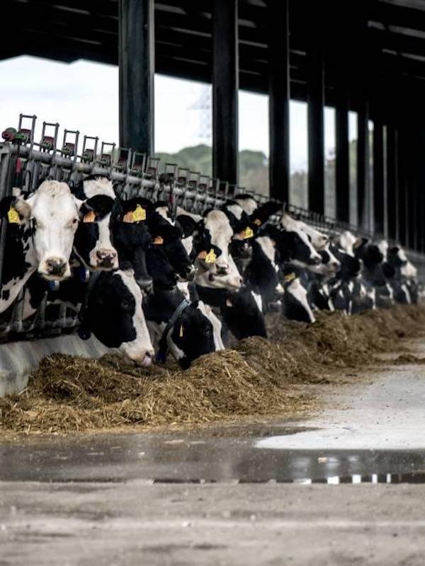 La ganadería española es ya la cuarta europea en emisiones