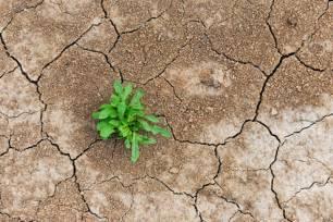 Justicia climática para salir de las crisis