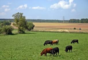65 propuestas para alcanzar los Objetivos de Desarrollo Sostenible en el medio rural