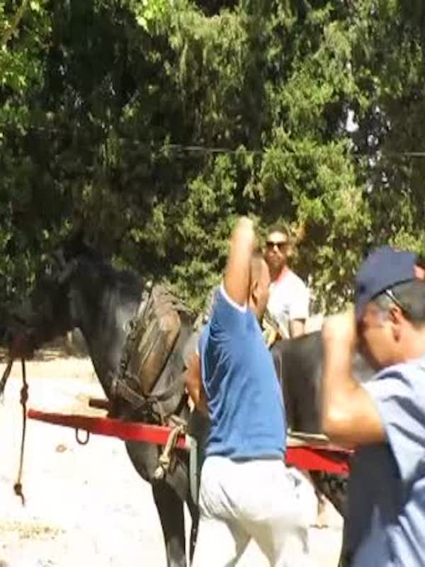 La barbarie del tiro y arrastre en la Comunitat Valenciana