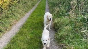 Este perro ciego consigue su propio perro guía (video)