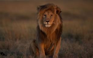 El miedo animal a los depredadores desaparece al contacto con humanos