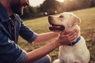 La Real Sociedad Canina pide un marco estatal de bienestar animal que unifique las normativas autonómicas