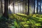 Líderes mundiales se comprometen a revertir la pérdida de la naturaleza para 2030