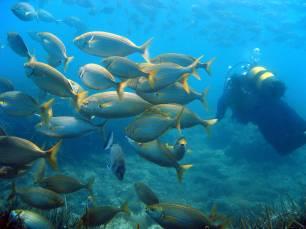 España avanza en el cumplimiento de los objetivos nacionales e internacionales de conservación marina