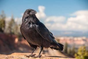 Demuestran procesos conscientes en el cerebro de aves por primera vez