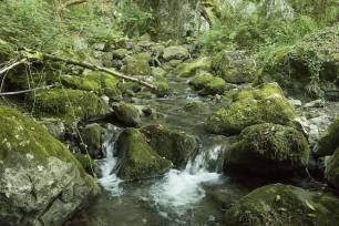 Asturias. No a la mini central del Rio Mosa en Proaza