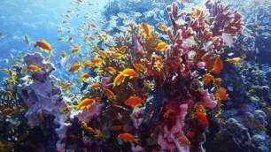 Sánchez y otros 63 jefes de Gobierno y la UE respaldan el 'Compromiso de los líderes por la Naturaleza'