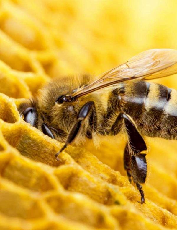 Año Nuevo, vida nueva para las 'abejas'