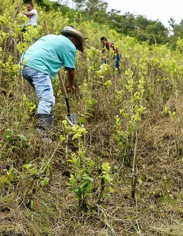 Colombia recupera la fumigación con glifosato