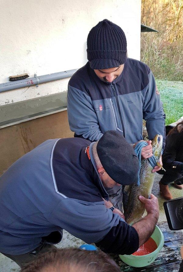 Programa navarro de voluntariado 'Apadrina un salmón en el Bidasoa'
