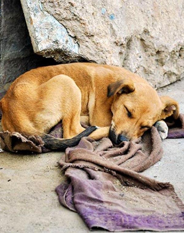 ¿Qué clase de 'sociedad' tenemos que tolera el abandono de tres animales cada cinco minutos?