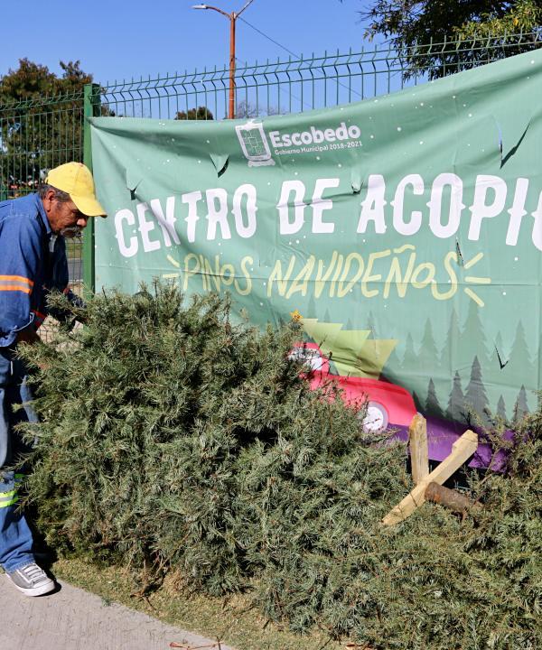 México. Acude a los centros de acopio y recicla tu árbol de Navidad