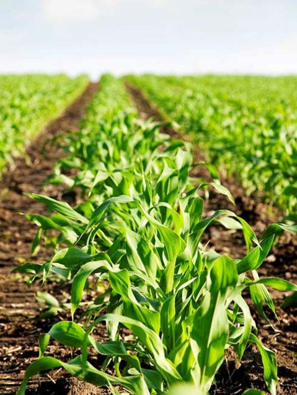 Comité de Agricultura Ecológica de la Comunitat Valenciana (CAECV), marcando 'tendencia'