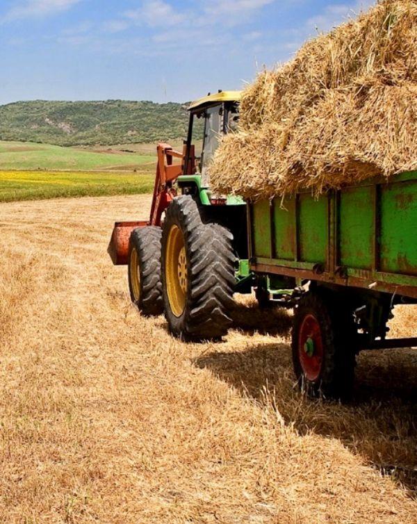 Castilla-La Mancha aporto de 3,3 millones de euros de ayudas para agricultores en zona ZEPA